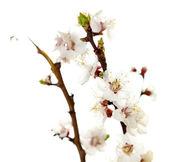 Beautiful flowers isolated on white — Stock Photo