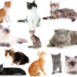 Collage of different cats isolated on white — Stock Photo #43887553