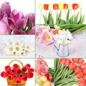 Collage of beautiful tulips — Stockfoto