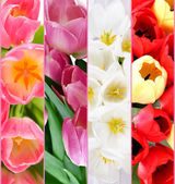 Collage of beautiful tulips close up — Stockfoto