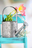 Beautiful spring flowers on blue old wooden chair  — Stock Photo