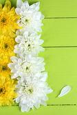 Beautiful chrysanthemum flowers on wooden table close-up — Stockfoto