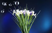 Beautiful irises on dark blue background — Stock Photo