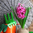 Composition with garden equipment and beautiful pink hyacinth flower in pot, on green grass, on wooden background — Stock Photo #43993635