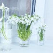 ������, ������: Beautiful bouquets of snowdrops in vases on windowsill