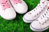 Beautiful gumshoes on green grass background — Foto de Stock