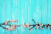 Blooming bud on color wooden background — Stock Photo