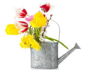 Beautiful flowers in watering can isolated on white — Stock Photo