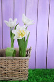 Beautiful tulips in wicker basket, on green grass on color wooden background — Photo
