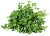 Fresh cilantro isolated on white — Stock Photo