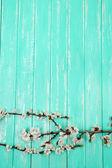 Renkli ahşap zemin üzerinde çiçek açan tomurcuk — Stok fotoğraf