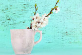 Beautiful apricot blossom in cup on old wooden background — Stock Photo