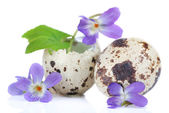 Easter composition with violets flowers in egg shells on wooden table — Stock Photo