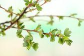 Leaf bud on bright background — Stock Photo