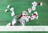 Beautiful apricot blossom in transparent jar on old wooden background — Stockfoto