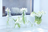 Beautiful bouquets of snowdrops in vases on windowsill — Stock Photo