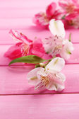 Beautiful Alstroemeria flowers on wooden table — Stock Photo