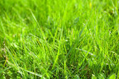 Beautiful spring grass outdoors — Stock Photo