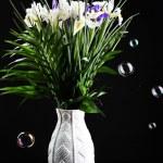 Постер, плакат: Beautiful irises on black background