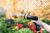 Jardinier, arrosage des fleurs dans le jardin — Photo