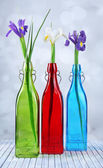Beautiful irises and daffodils in bottles, on light background — Stock Photo