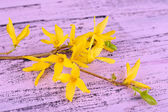 Blooming tree branch with yellow flowers on wooden background — Stock Photo