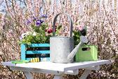 Gardening concept: beautiful flowers in garden with sun light — Photo