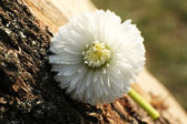 красивый весенний цветок, на открытом воздухе — Стоковое фото