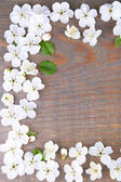 Beautiful cherry blossom on wooden background — Stock Photo