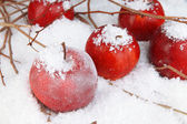 Red apples in snow close up — Stock Photo