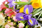 Beautiful flowers close up — Stock Photo