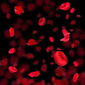 Beautiful red rose petals on dark background — Stock Photo
