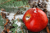 Red apple with fir branches on bark in snow close up — Zdjęcie stockowe