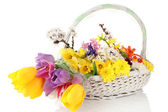 Beautiful flowers in wicker basket, isolated on white — Stock Photo
