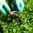 Pruning bushes in garden — Stock Photo #45241131