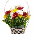 Beautiful bouquet of bright flowers in wicker basket isolated on white — Stock Photo #45242127