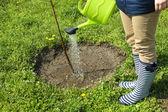 Ogrodnik podlewania młode drzewo na wiosnę — Zdjęcie stockowe