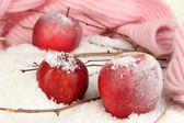 Cerrar las manzanas rojas en la nieve — Foto de Stock