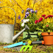 Beautiful flowers in flowerpots and gardening tools, outdoors — Stock Photo