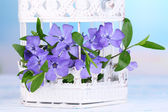Beautiful periwinkle flowers in decorative cage on wooden table — Stock Photo