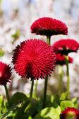 Güzel bahar çiçekleri, açık havada — Stok fotoğraf