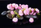 Beautiful fruit blossom isolated on black — Stock Photo