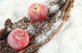 Red apples on bark in snow close up — Stock Photo