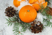 Ripe tangerines with fir branch in snow close up — 图库照片