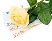 Beautiful rose and money, isolated on white — Stock Photo