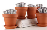 Business concept: growing money in the flowerpots, isolated on white — Stock Photo