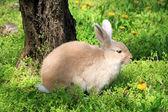 Cute rabbit, outdoors — Stock Photo