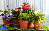 Beautiful flowers in flowerpots, on wooden background — Foto Stock