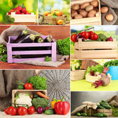 Collage of fruits and vegetables in wooden boxes — Stock Photo
