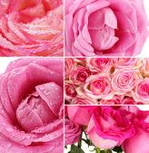 Hermosas rosas el collage, cerca a — Foto de Stock